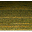 Еловая зелень
